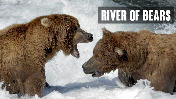 River of Bears